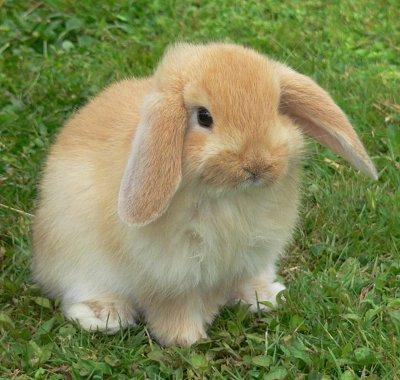 [Image: bunny.jpg]