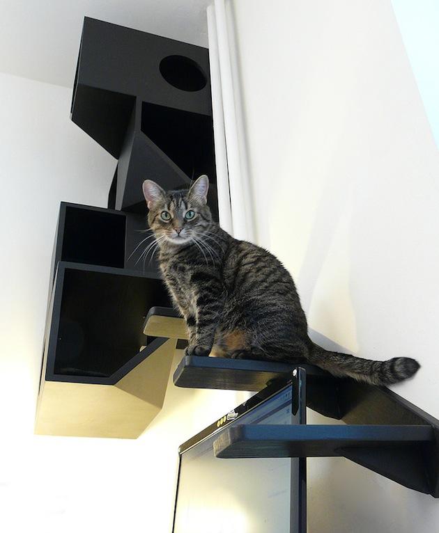 modular cat cubes animal arts. Black Bedroom Furniture Sets. Home Design Ideas
