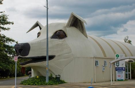 dog building