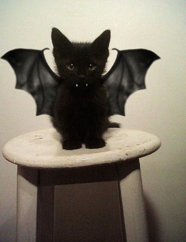 pet-halloween-costume-cat